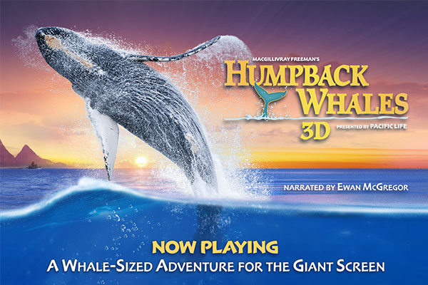 "Enjoy a larger-than-life adventure with the documentary ""Humpback Whales,"" playing daily in the IMAX Theatre."