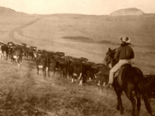 The long road on a cattle drive
