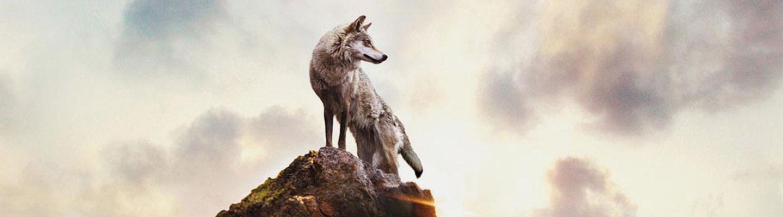 wolf-totem-banner.jpg