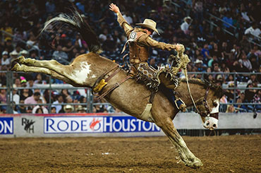 Bronc rider at the rodeo