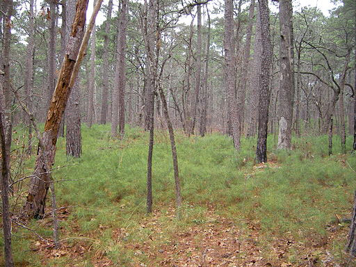 The East Texas piney woods were home to early American Indians.